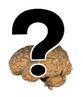 De um ponto de vista filosófico, pode-se dizer que a função mais importante do cérebro é servir como estrutura física subjacente da mente. Do ponto de vista biológico, entretanto, a função mais importante do cérebro é a de gerador de comportamentos que promovam o bem-estar de um animal. O cérebro controla o comportamento, seja ativando músculos, seja causando a secreção de substâncias químicas, como os hormônios.